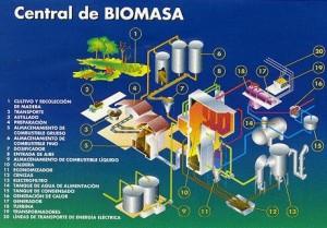 china biomasa